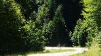 Bosque de Irati en bicicleta bosque | BIKING THROUGH SPAIN