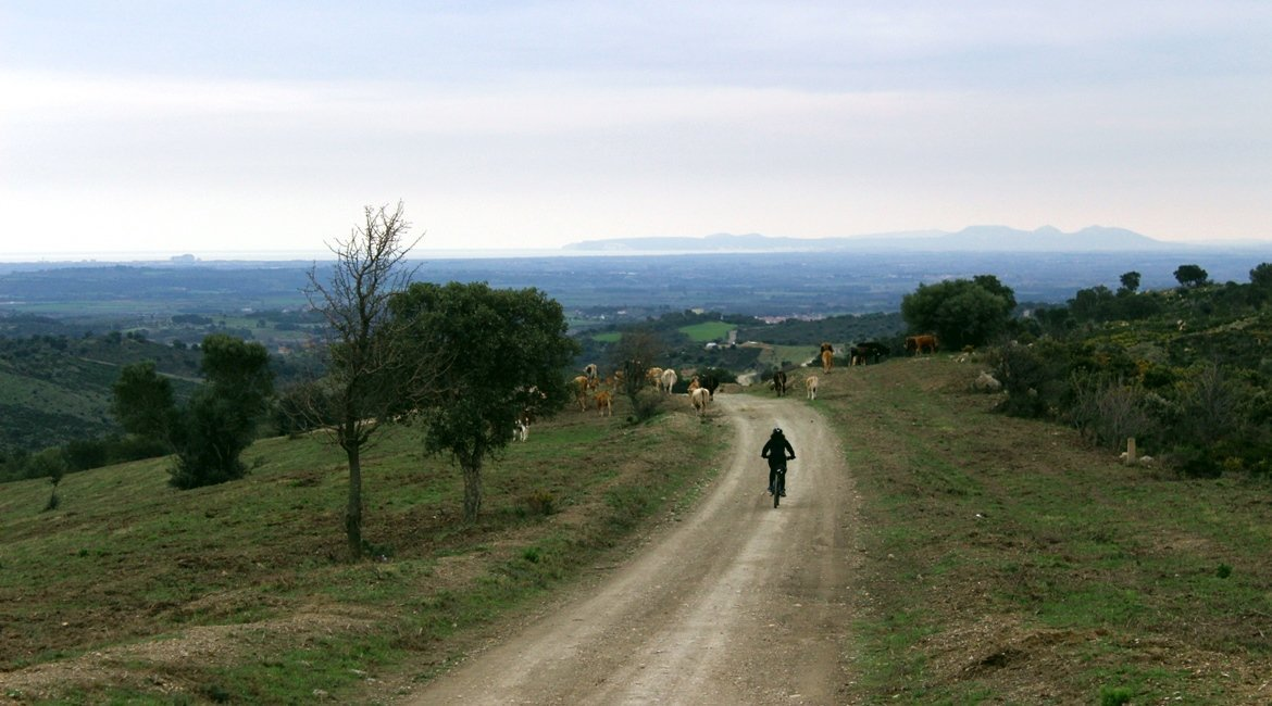 Albera en bicicleta Vacas|BIKING THROUGH SPAIN