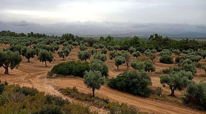 Matarranya-camps-oliveres-BICIS-EN-RUTA-1170x650