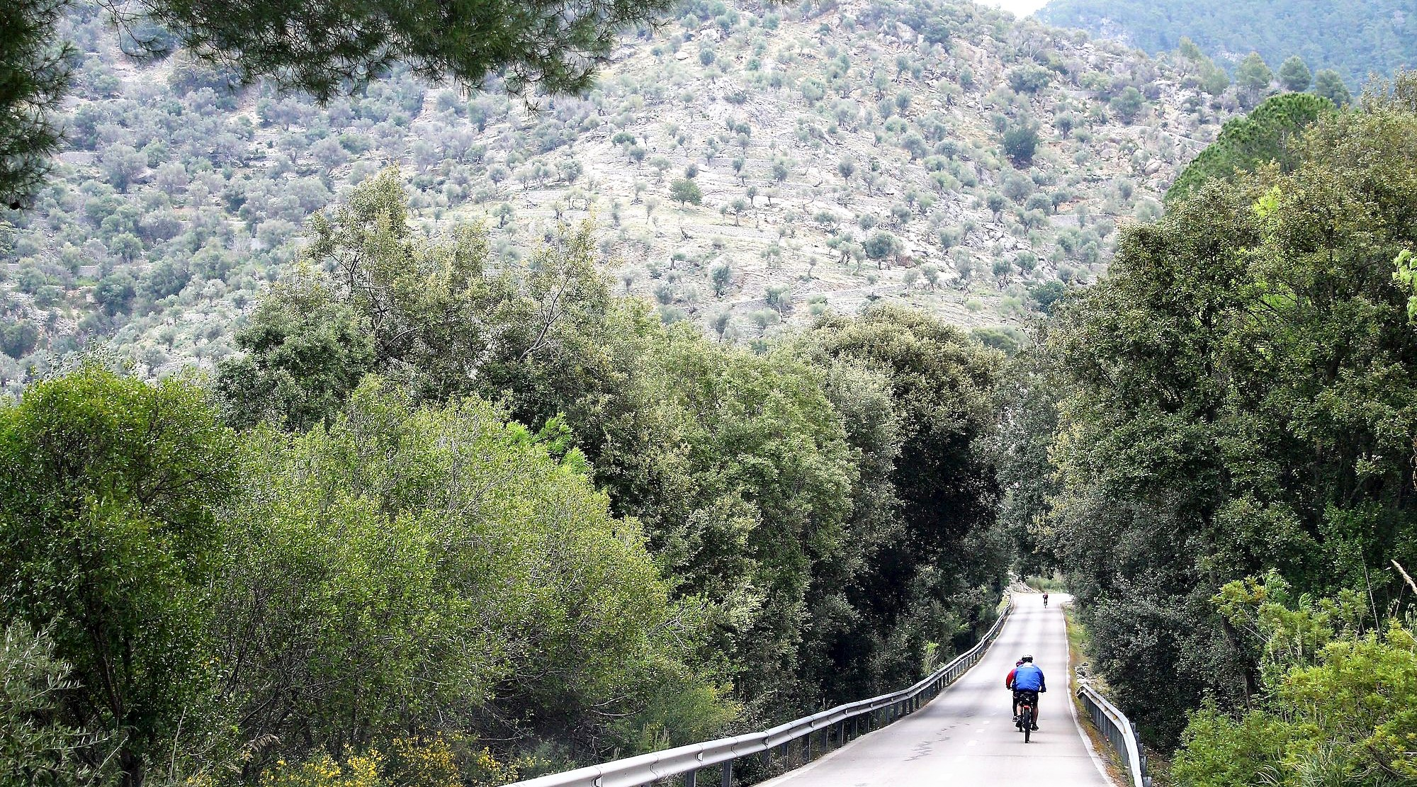 Serra de Tramuntana en bicicleta. Alaro 2. BICIS EN RUTA. 1170x650